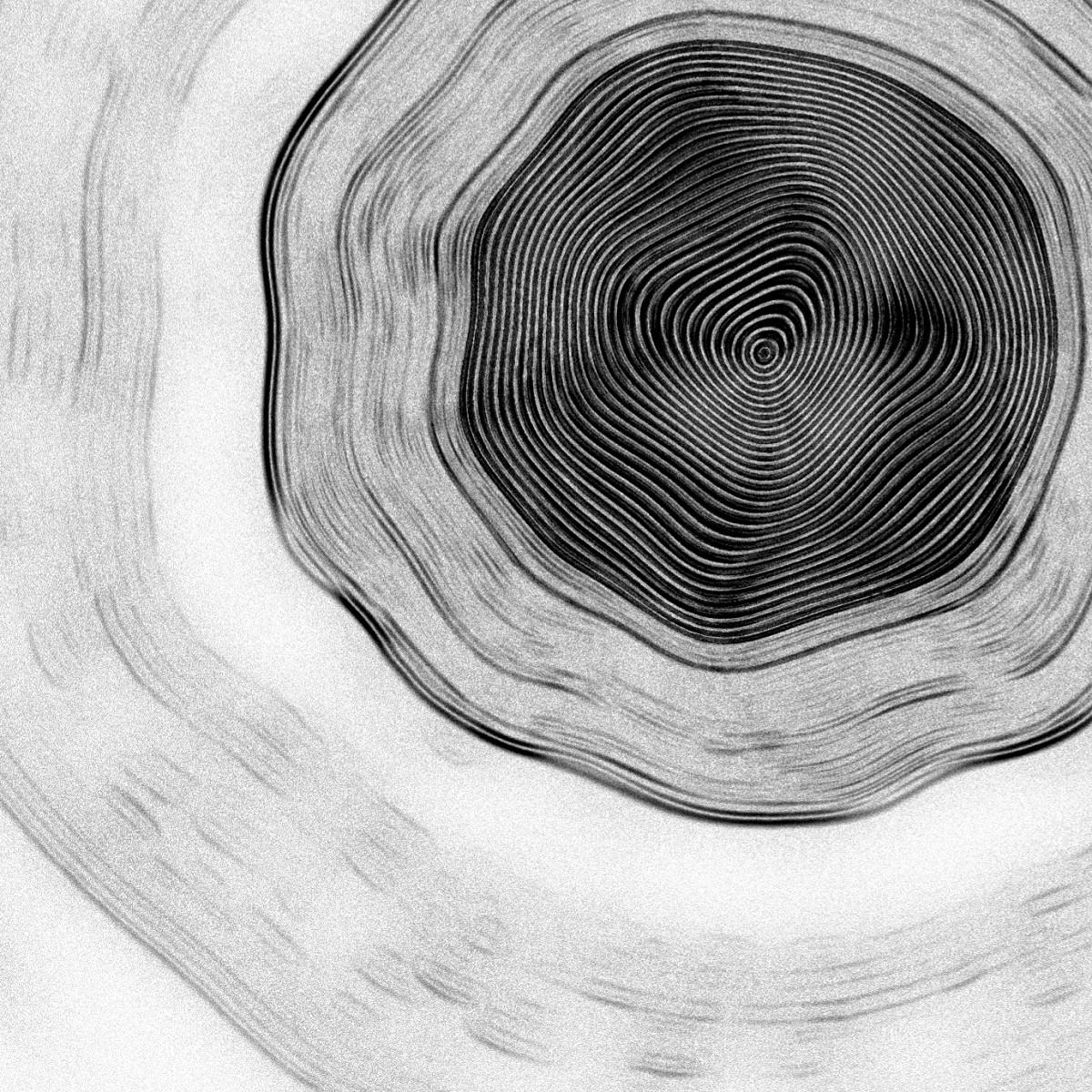 shelly-alon-Interaktive Visualisierung